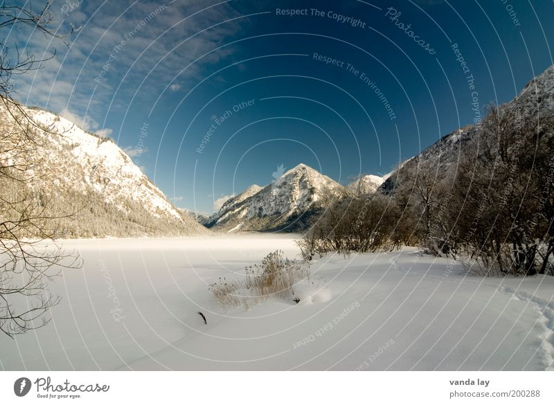 Water Tree Plant Winter Loneliness Cold Snow Mountain Lake Landscape Ice Environment Frost Alps Peak Frozen