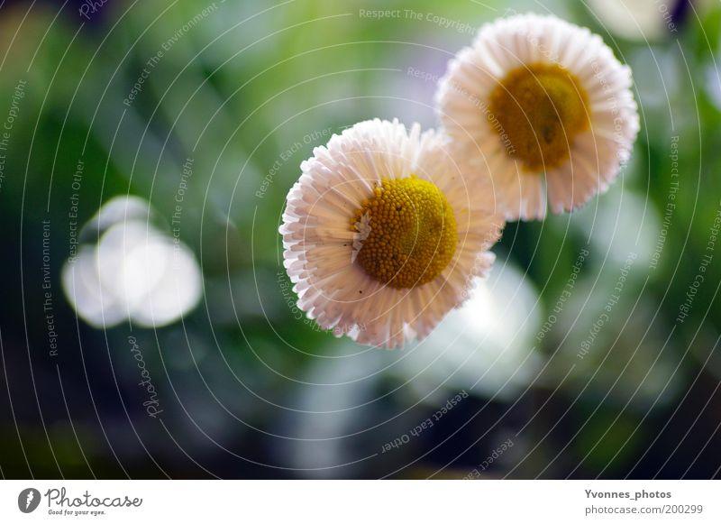 Nature Beautiful White Flower Green Plant Summer Yellow Meadow Blossom Grass Spring Garden Park Environment Fresh