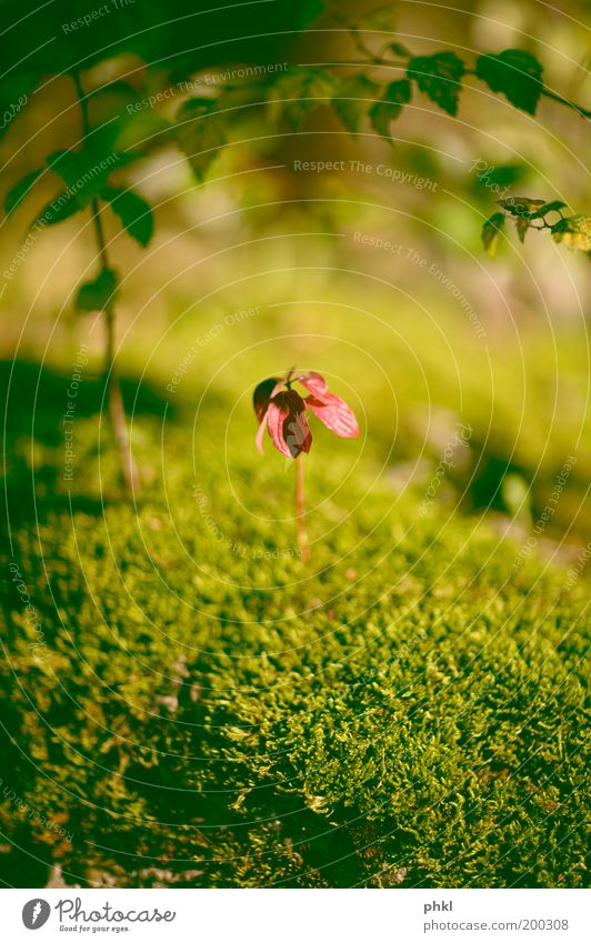 Last Standing Man 1 Environment Nature Plant Climate Flower Grass Bushes Moss Leaf Foliage plant Exotic Garden Glittering Exceptional Cool (slang)