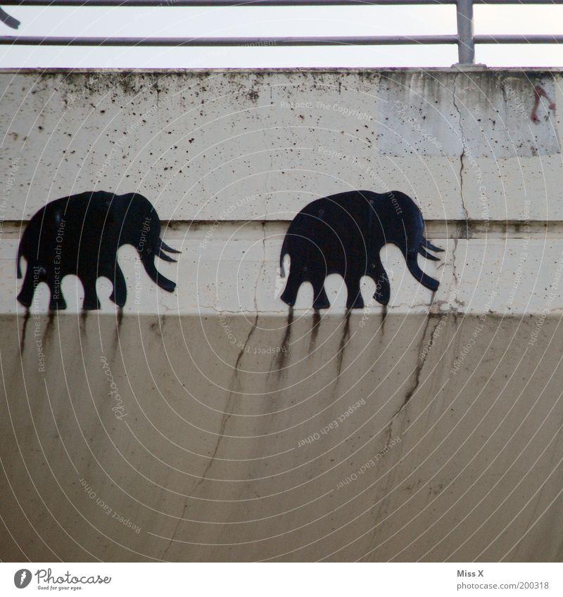 elephant race Bridge Wall (barrier) Wall (building) Facade Zoo 2 Animal Graffiti Running Overtake Elephant Trunk Colour photo Subdued colour Exterior shot