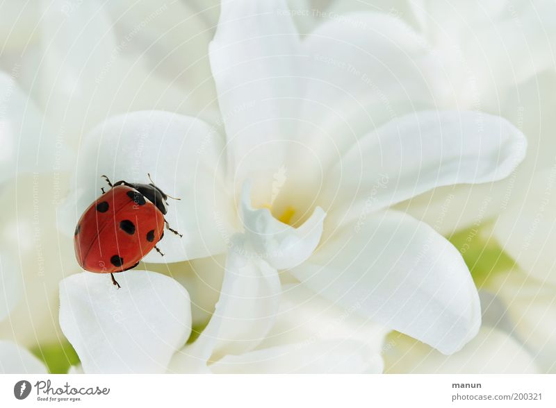 contrast program Valentine's Day Mother's Day Baptism Nature Spring Summer Flower Ladybird Sign Good luck charm Elegant Happiness Positive Red White Emotions