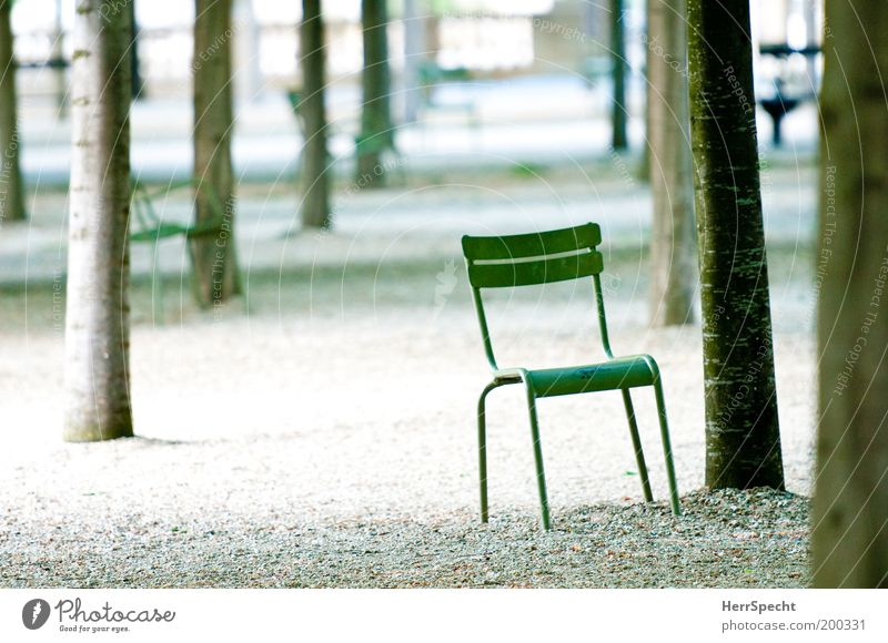 Tree Green Gray Lanes & trails Park Metal Chair Row Gravel Pebble Things Love of nature Row of trees