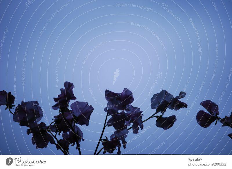 Beautiful Flower Blue Plant Calm Black Dark Cold Emotions Blossom Dream Sadness Air Elegant Hope Grief