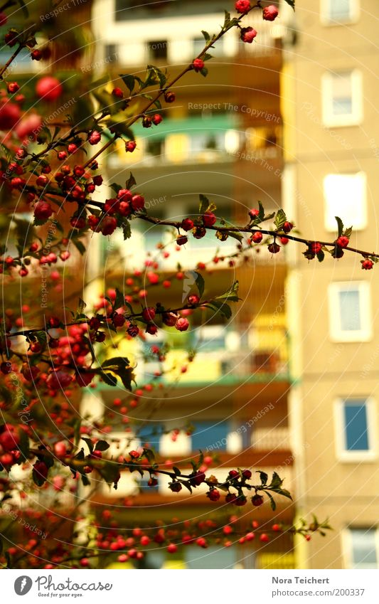 Nature Beautiful Plant Red Summer House (Residential Structure) Life Window Blossom Spring Pink Environment High-rise Facade Fresh Growth