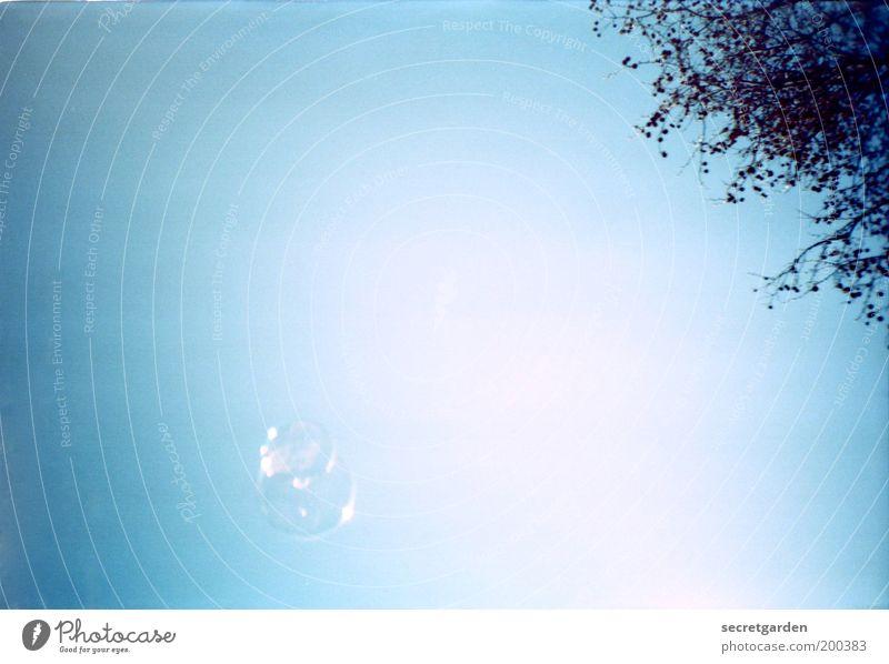 Blue Summer White Joy Happy Small Bright Glittering Fresh Infancy Bushes Esthetic In pairs Wet Transience Retro