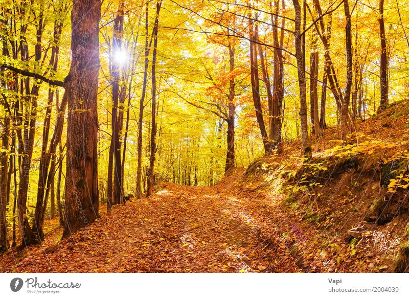 Morning in the autumn forest Sun Nature Landscape Sunrise Sunset Autumn Tree Leaf Park Forest Bright Multicoloured Yellow Orange Red Colour fall light