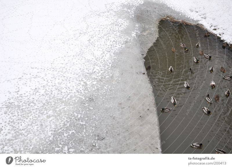 Water White Winter Animal Cold Snow Gray Ice Wait Weather Hope Frost Communicate River Group of animals