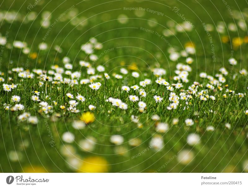 daisies Environment Nature Landscape Plant Elements Earth Spring Summer Climate Weather Beautiful weather Warmth Flower Blossom Garden Park Meadow Bright