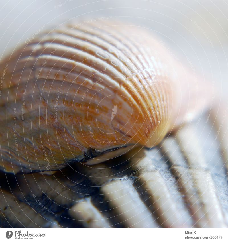 seashells Nature Coast Ocean Animal Aquarium Mussel Mussel shell Furrow Colour photo Subdued colour Exterior shot Close-up Detail Macro (Extreme close-up)