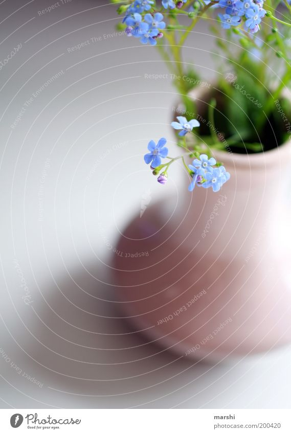 DON'T FORGET ME Plant Flower Soft Blue Green Forget-me-not Delicate Vase Decoration Bouquet Blossom Blossom leave Spring Colour photo Interior shot