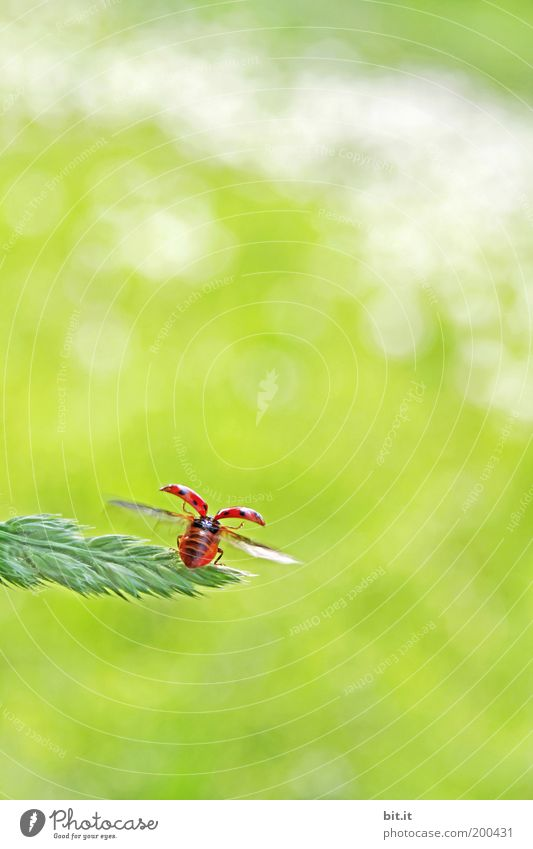 and bye-bye Happy Summer Environment Nature Animal Grass Meadow Beetle Cute Green Red Optimism Ladybird Flying Good luck charm Symbols and metaphors Hope