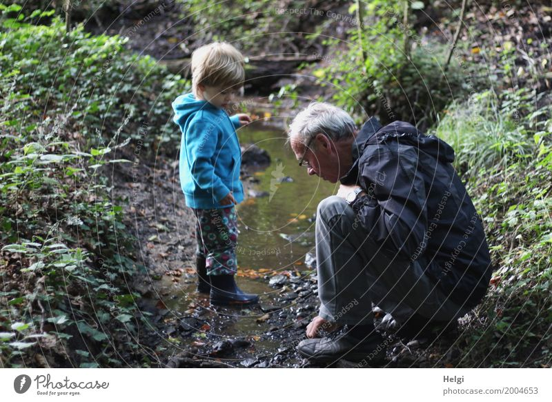 little boy and his grandfather are on a discovery tour at a brook in the forest Human being Masculine Toddler Boy (child) Male senior Man Grandfather Infancy