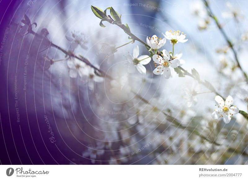 spring blooms Environment Nature Spring Beautiful weather Plant Tree Bushes Blossom Garden Park Blossoming Natural Blue Violet White Twig Colour photo