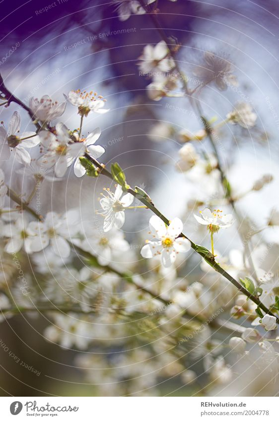 spring blooms Environment Nature Plant Sun Spring Beautiful weather Tree Bushes Blossom Blossoming Growth Esthetic Fragrance Natural White Twigs and branches