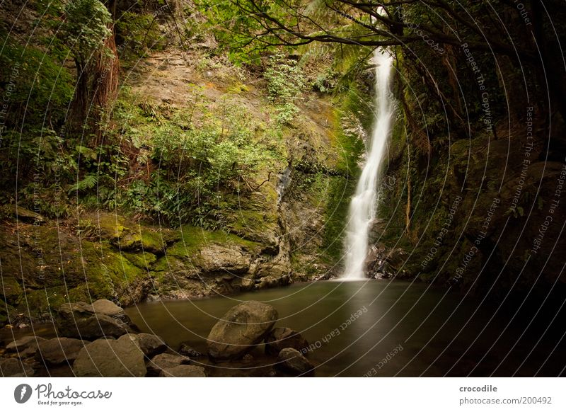 New Zealand 60 Environment Nature Landscape Elements Water Plant Tree Grass Bushes Moss Forest Virgin forest Hill Rock Pond Waterfall Esthetic Exceptional