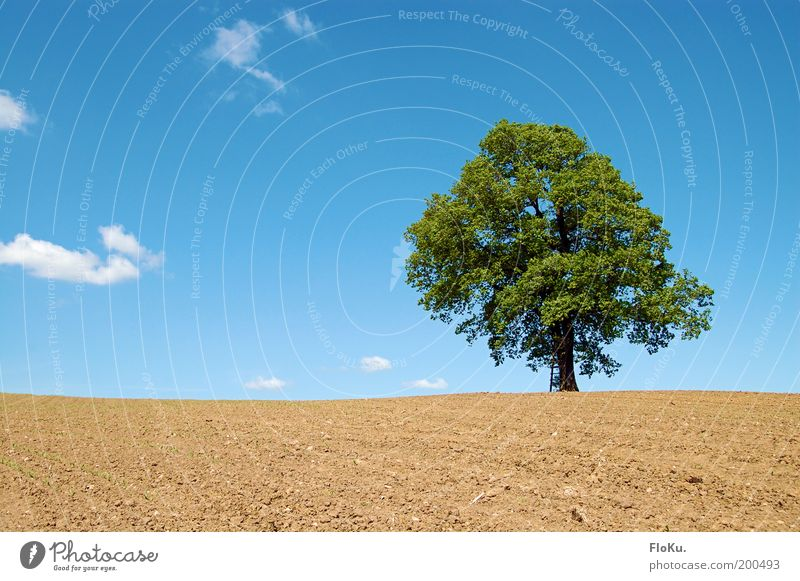Nature Sky Tree Green Blue Plant Loneliness Spring Landscape Brown Field Weather Environment Horizon Earth Growth