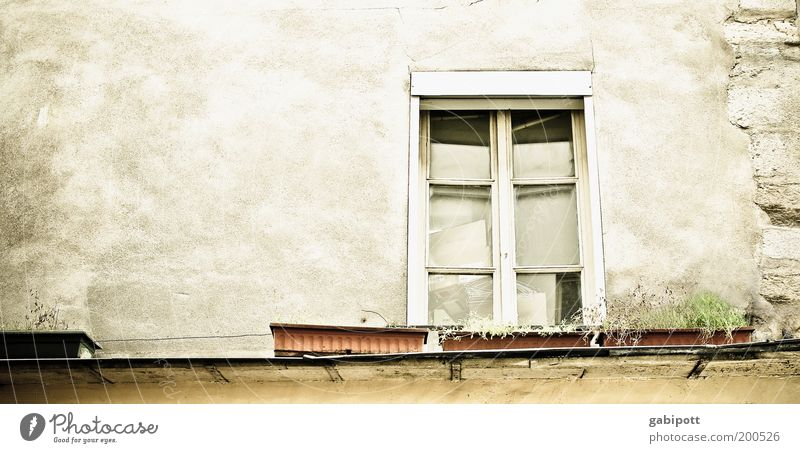 le marais Paris France House (Residential Structure) Building Architecture Wall (barrier) Wall (building) Facade Window Window box Window board Free Gray Green