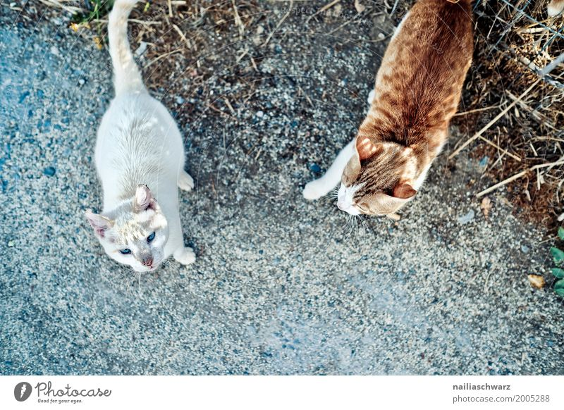 Street cats, Crete Summer Nature Animal Pet Cat 2 Group of animals Pair of animals Observe Discover Communicate Walking Looking Brash Together Natural Curiosity