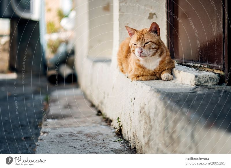 street cat Summer Village Small Town Deserted House (Residential Structure) Wall (barrier) Wall (building) Animal Pet Cat 1 Stone Observe Relaxation To enjoy