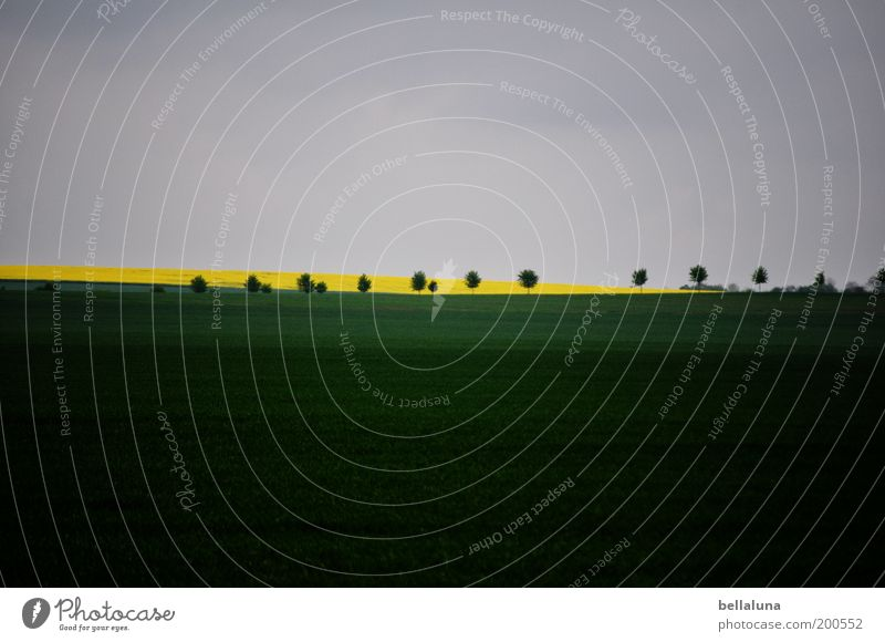Rhapsody in Green minor Environment Nature Plant Cloudless sky Weather Beautiful weather Agricultural crop Field Blue Yellow Gray Canola Tree Landscape