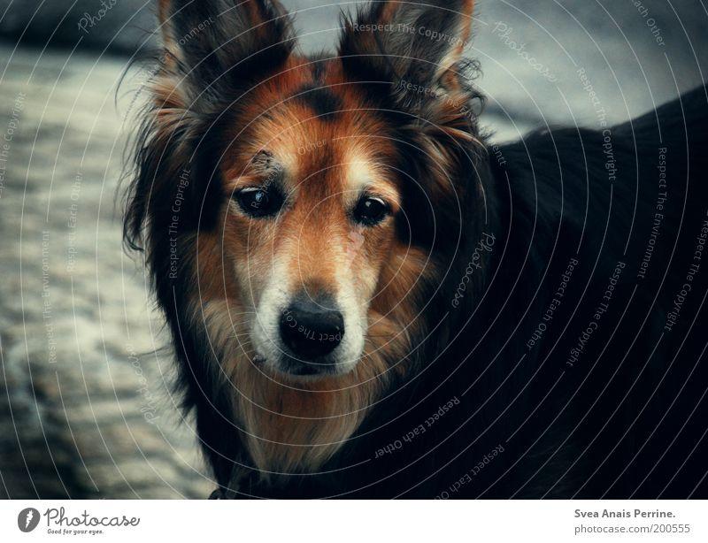 Red Black Animal Dark Emotions Dog Stone Moody Brown Wait Soft Observe Wild Pelt Brave Cobblestones