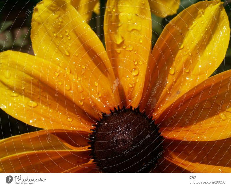 Sun Flower Plant Sunhat