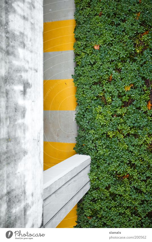 Green Plant Yellow Wall (building) Gray Wall (barrier) Concrete Border Manmade structures Parking garage Graphic Perspective Zebra crossing Pedestrian precinct