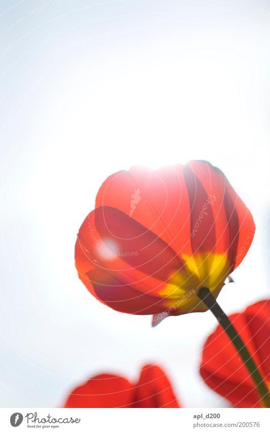 Sky Nature Plant Green Sun Flower Red Environment Yellow Life Spring Garden Air Illuminate Esthetic Beautiful weather
