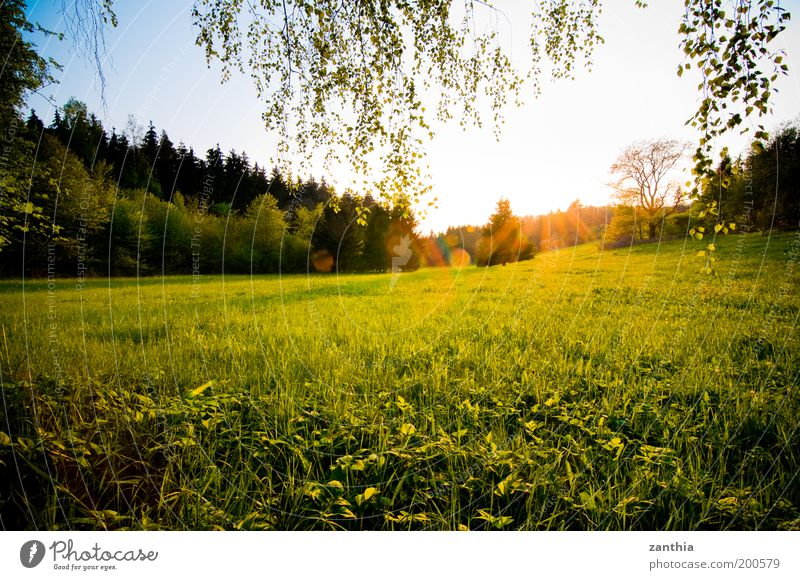 spring Environment Nature Landscape Plant Sun Sunrise Sunset Sunlight Spring Beautiful weather Grass Meadow Field Forest Bright Natural Warmth Yellow Gold Green