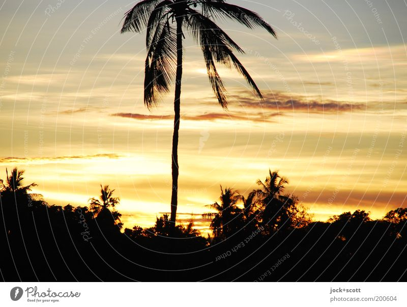 machweo Far-off places Sky Clouds Sunlight Beautiful weather Exotic Palm tree Kenya Africa Cliche Romance Kitsch Vacation photo Dusk Travel photography Paradise