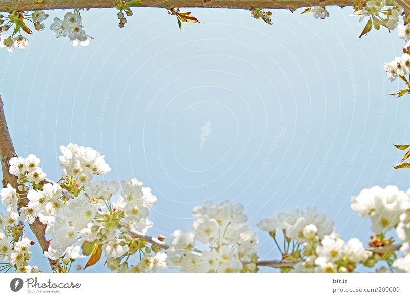 Nature Beautiful Sky White Blue Calm Blossom Feasts & Celebrations Perspective Corner Romance Peace Kitsch Fragrance Nostalgia Bud