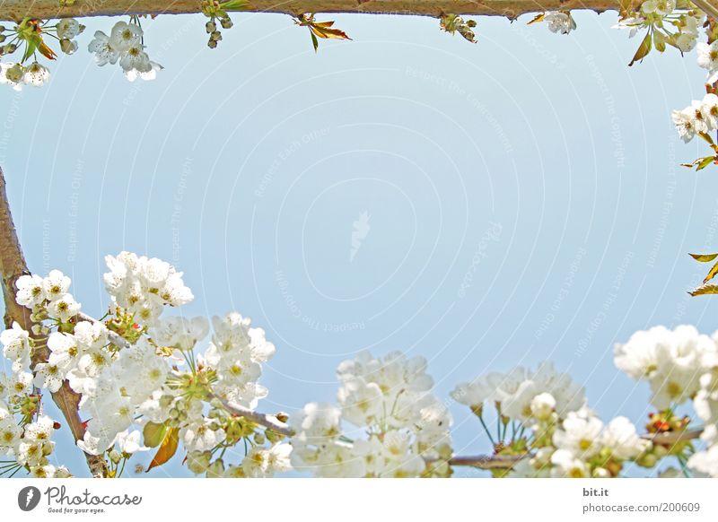 Nature Beautiful Sky White Blue Calm Blossom Feasts & Celebrations Perspective Corner Romance Peace Kitsch Fragrance Nostalgia Bud