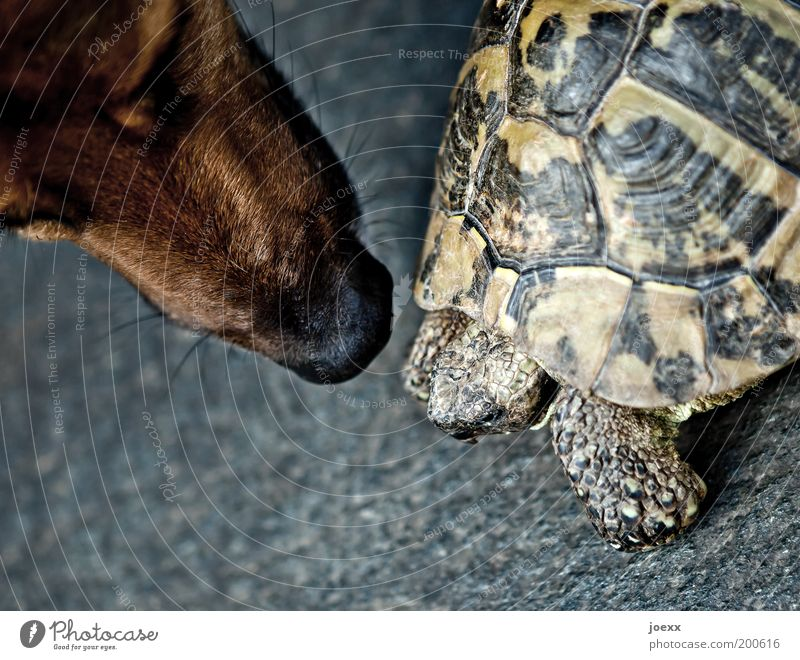 Just look, don't touch... Animal Pet Dog 2 Threat Curiosity Acceptance Protection Love of animals Fear Trust Turtle Tortoise-shell Odor Encounter Colour photo