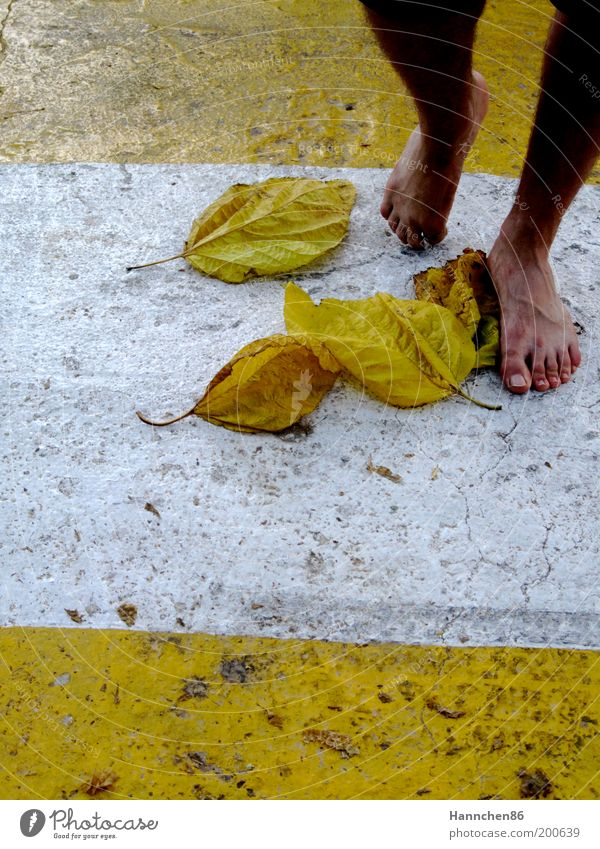 Nature White Leaf Yellow Freedom Feet Contentment Detail