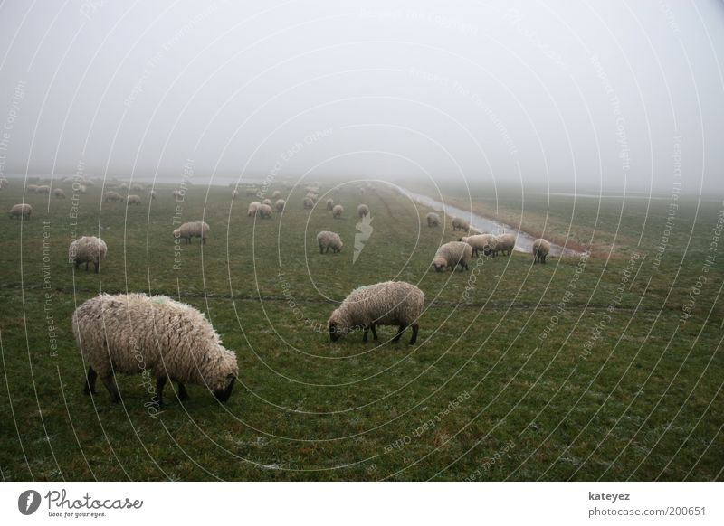 Nature Water Green Vacation & Travel Animal Meadow Grass Spring Landscape Air Contentment Fog Trip Group of animals Stand