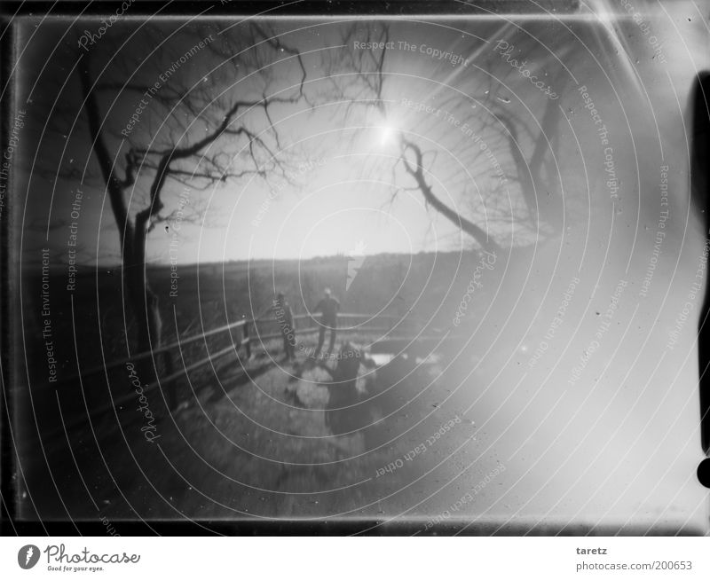 rememberance Human being 2 Landscape Beautiful weather Tree Emotions Vantage point Handrail hole camera pinhole Large format Shaft of light Mystic