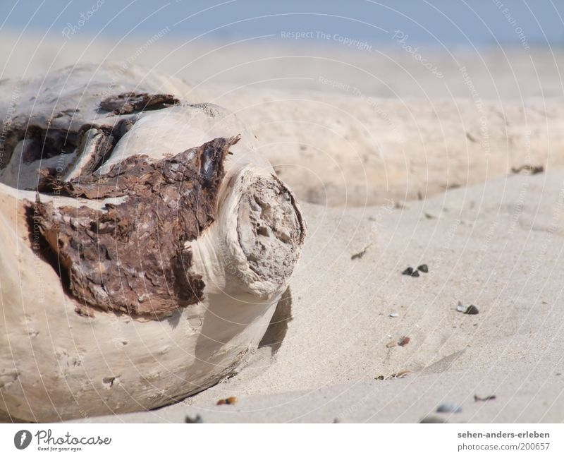 wooden eye Environment Nature Landscape Earth Sand Summer Warmth Drought Coast Beach North Sea Desert Wood Moody Calm Thirst Loneliness Exhaustion Decline Past