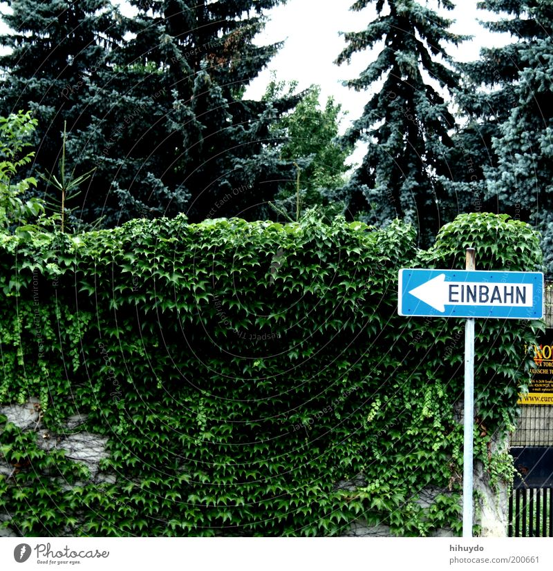 Nature Plant Leaf Environment Garden Signs and labeling Signage Bushes Observe Arrow Fir tree Direction Indicate Left Hedge Road sign