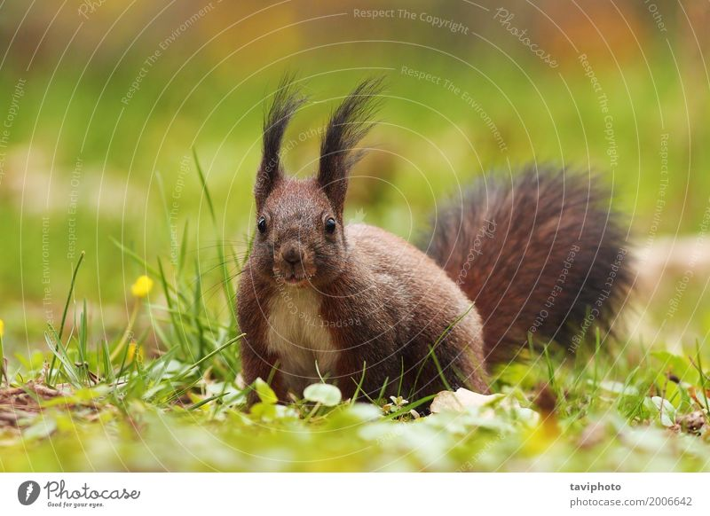 cute squirrel in the park Nature Animal Grass Park Forest Fur coat Smiling Sit Small Funny Natural Cute Wild Brown Gray Green Red Colour Squirrel Ground