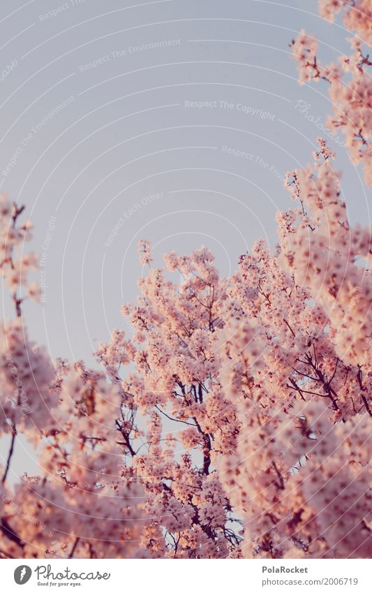 #AS# Pink Spring II Nature Landscape Plant Esthetic Spring fever Spring day Spring colours Spring celebration Blossoming Green pastures Many Cherry blossom Sky
