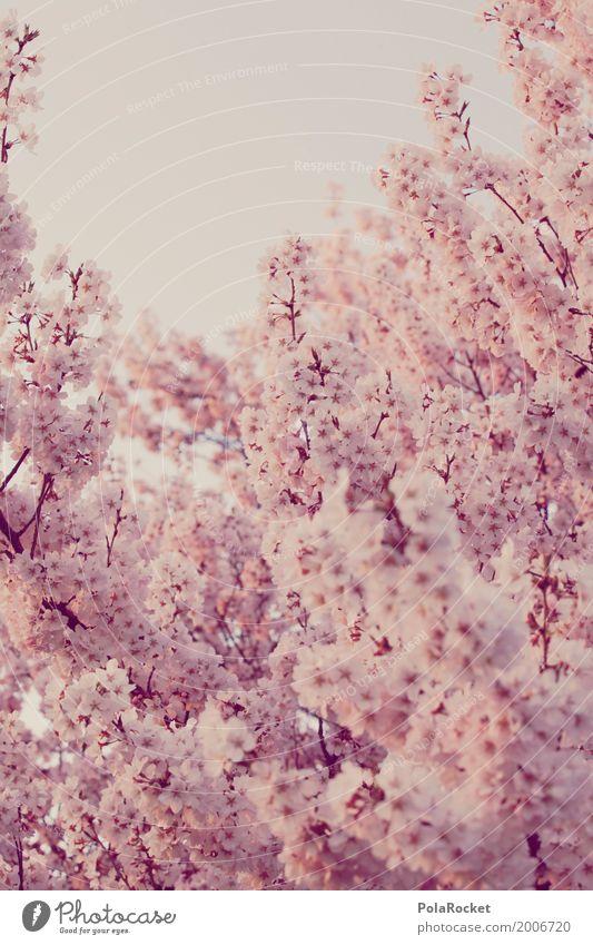 Blossom Spring Art Pink Esthetic Many Blossom leave Spring fever Cherry blossom Cherry tree Spring day Spring colours Spring celebration