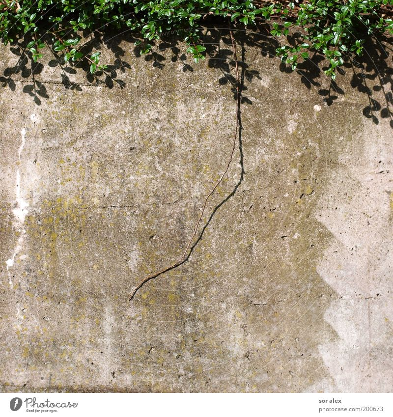 Nature Plant Green Wall (building) Background picture Wall (barrier) Gray Growth Concrete Branch Protection Safety Hideous Overgrown Colorless Concrete wall