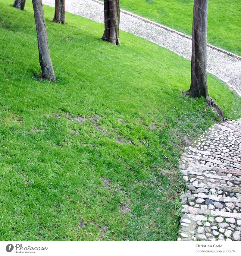 slope Environment Nature Landscape Summer Tree Garden Park Green Italy Stone Stone path Meadow Lawn Green space Lanes & trails Cobblestones Cypress Tree trunk