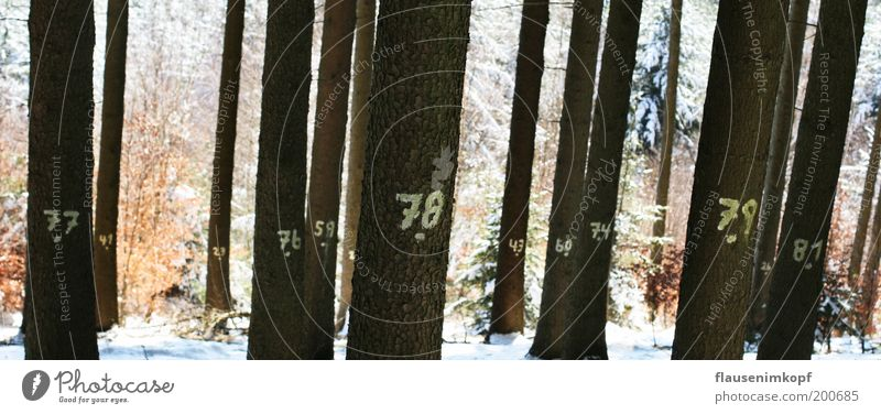 Nature Tree Winter Calm Forest Snow Wood Environment Signs and labeling Growth Digits and numbers Tree trunk Puzzle Think Sustainability Forestry