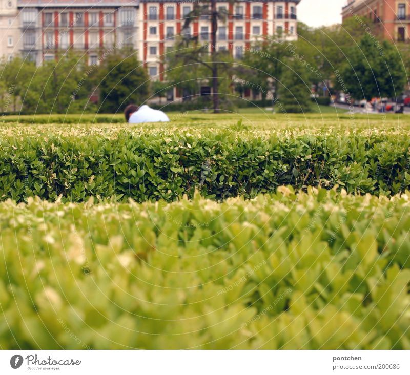 Man bends down in front of accurately cut hedge. Park area Adults 1 Human being Plant bushes Foliage plant Hedge Madrid Spain Capital city