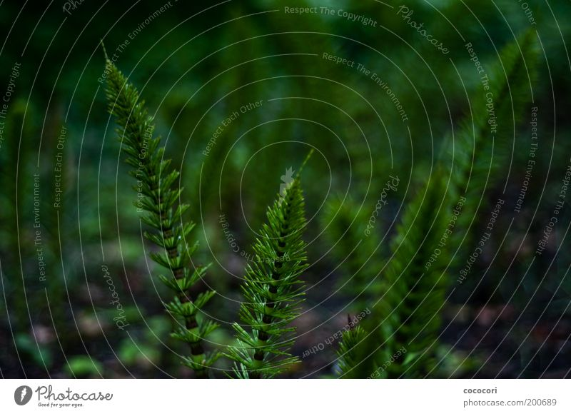 nested straws Nature Plant Horsetail Natural Beautiful Green Growth Fairytale landscape Colour photo Exterior shot Close-up Evening Blur Shallow depth of field