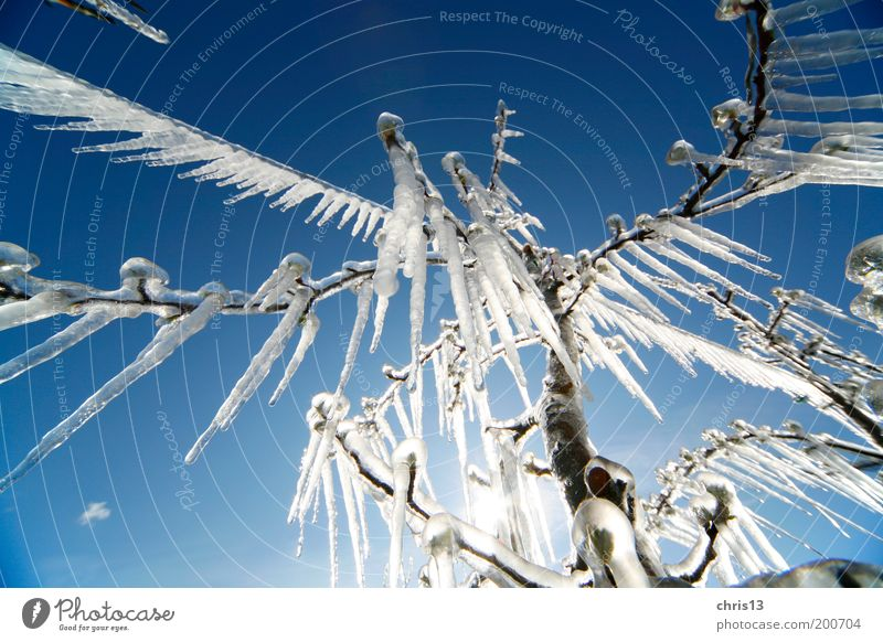 icicles Sky Winter Ice Frost Tree Cold Blue White Environment Detail Wide angle Icicle