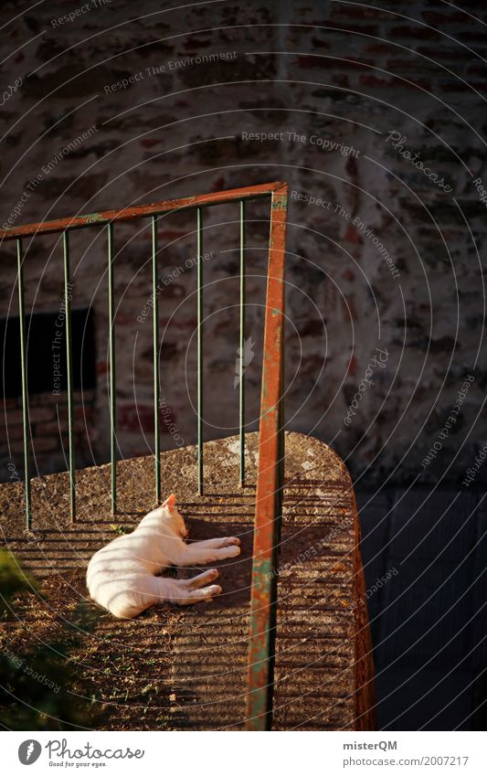 Sunny Cat. Art Esthetic Domestic cat South Handrail Backyard Sleep Lie Pet Animal Colour photo Subdued colour Exterior shot Detail Experimental Abstract
