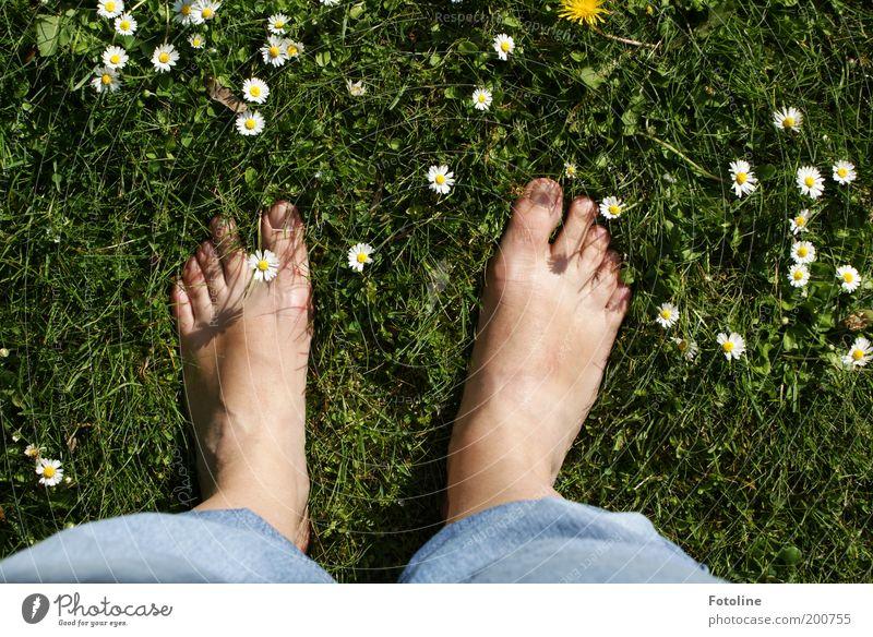My feet :-)) Adults Skin Legs Feet Environment Nature Plant Summer Beautiful weather Flower Grass Blossom Garden Park Meadow Warmth Soft Green Daisy Barefoot
