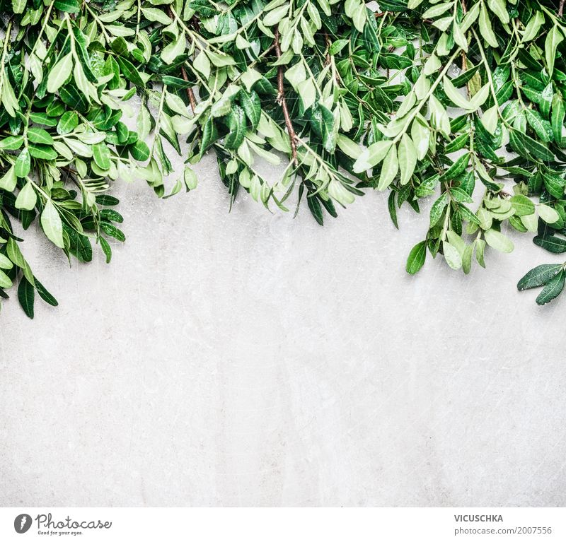 Nature background with green leaves Style Design Summer Garden Plant Bushes Leaf Foliage plant Wall (barrier) Wall (building) Ornament Background picture Green